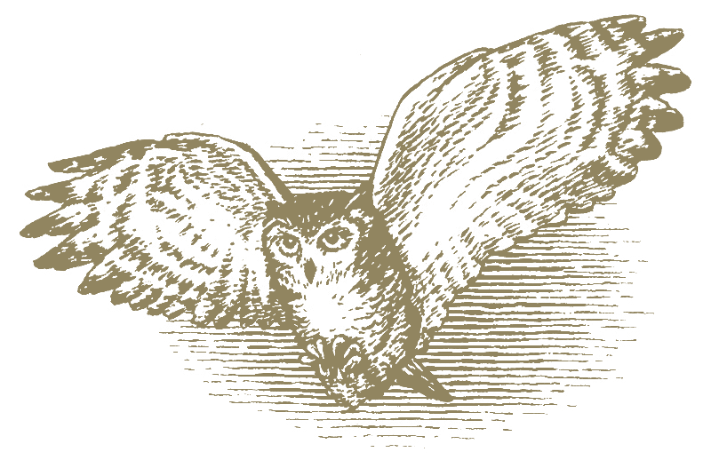 owl-illustrated-1815U-transp.png