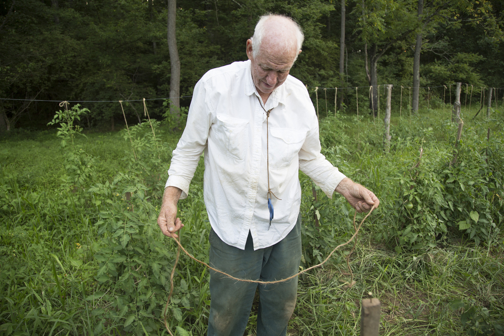 20140805_tomato staking with Dad and Erin_3930.jpg