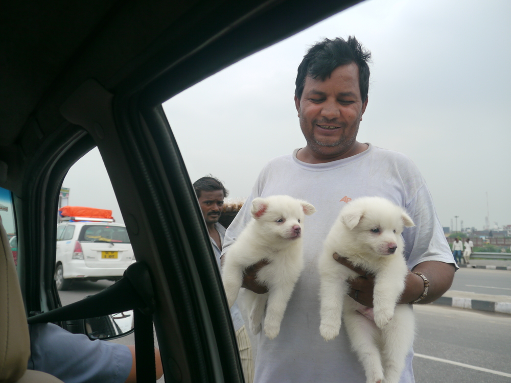 The things they sell at the traffic lights in India!