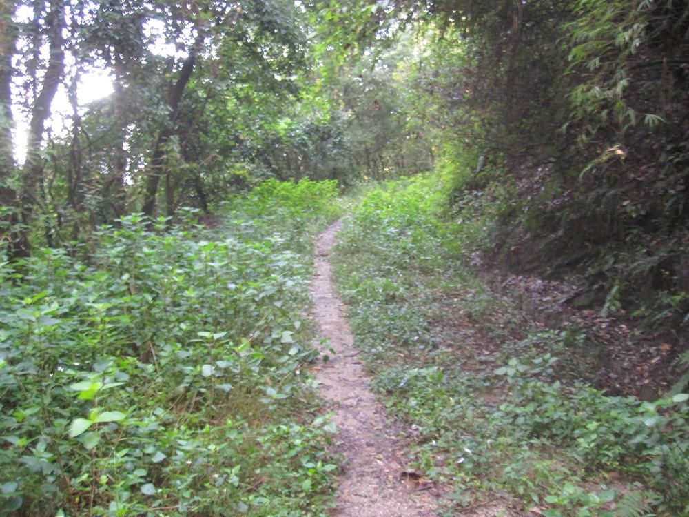 A bit of single track through Shivapura National Park