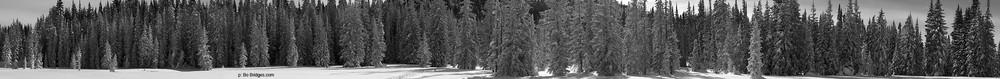 Snow_Trees_Pano08_B&W.jpg