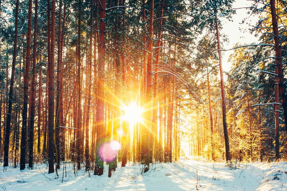 photodune-21770582-beautiful-sunset-sunrise-sunshine-in-sunny-winter-snowy-conifero.jpg