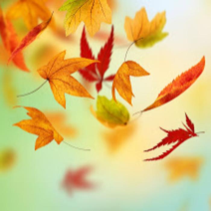 Leaves falling.jpg
