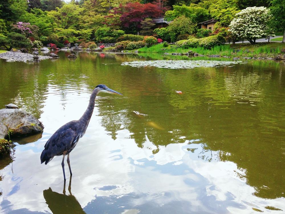 Heron, Seattle Japanese Garden