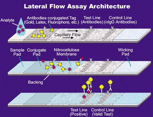Lateral Flow diagram.png