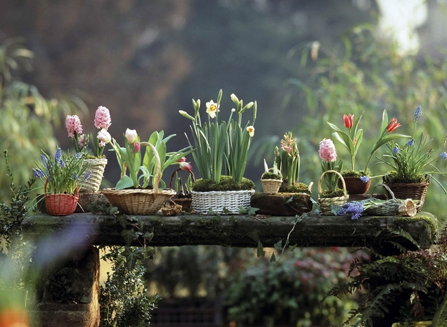decorating-home-spring-flowering-bulbs-arrangement-baskets.jpg