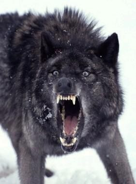 Insanity Wolf!