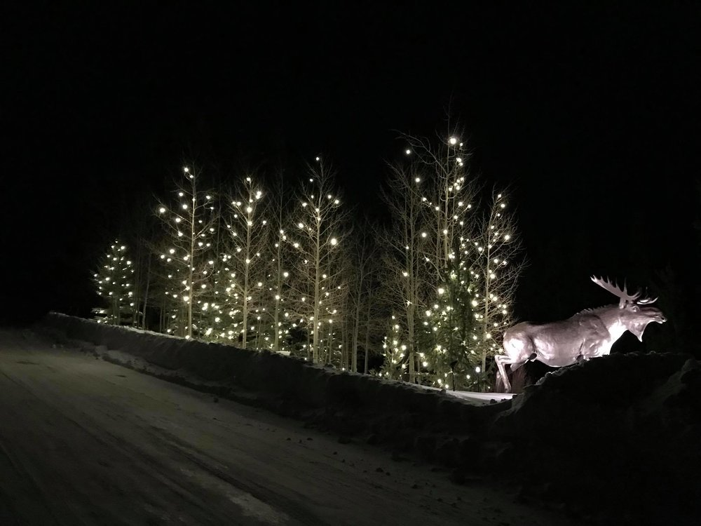 Spruce Valley Ranch Breckenridge, CO Floating Tree Lights - We decorated 14 Trees for this Home owners association just south of downtown Breckenridge in Blue River. We installed our Floating C9 LED lights on both Aspen and Blue Spruce Pine Trees.