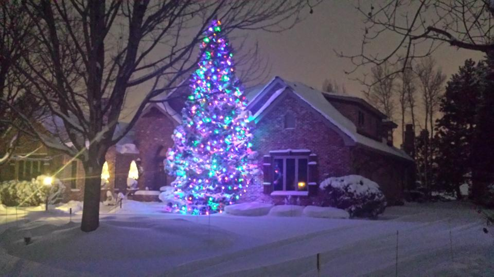 glenmoor country club 45 pine tree with multi color c9 led lights cherry hills village - Colorado Christmas