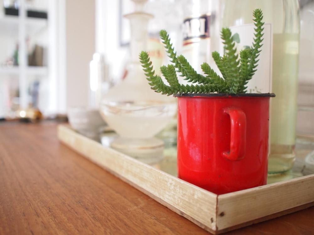bar plant.jpg
