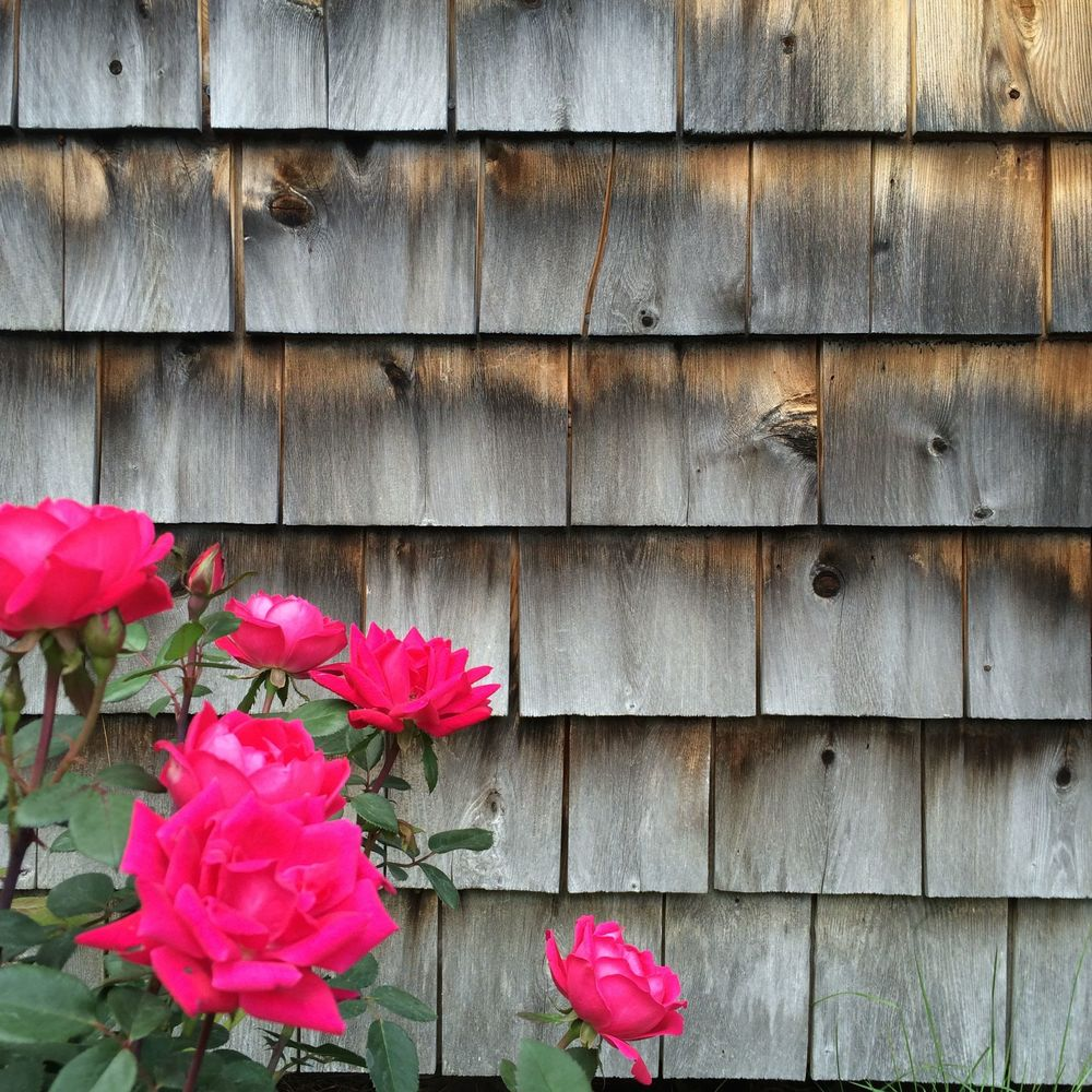 New roses! No filter!
