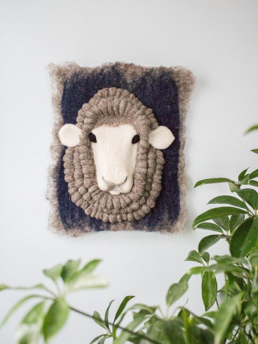 Indigo Merino Sheep