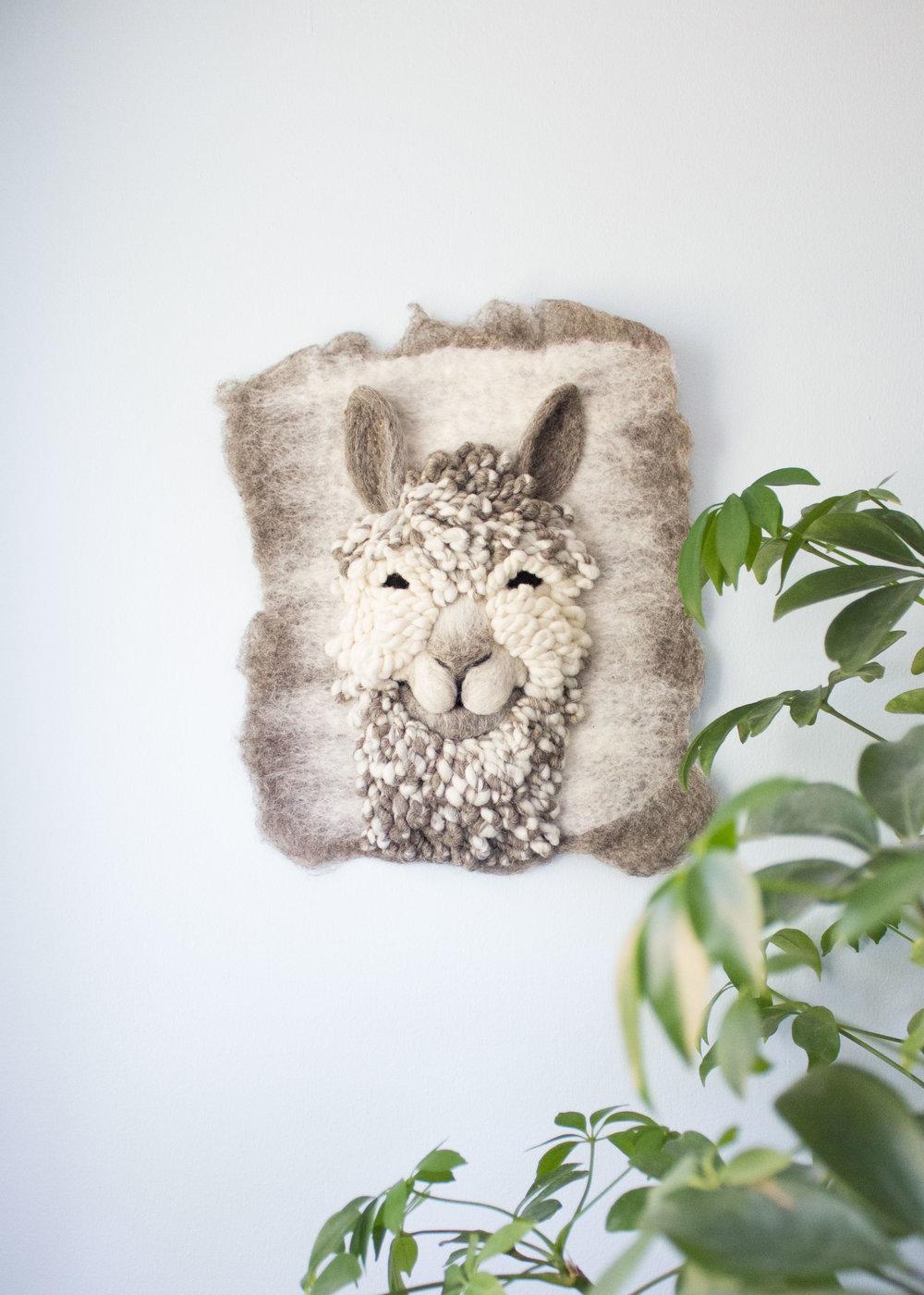 Face Forward Suri Alpaca