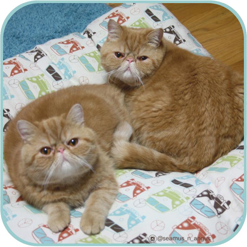 Seamus & Angus - Seamus_n_Angus
