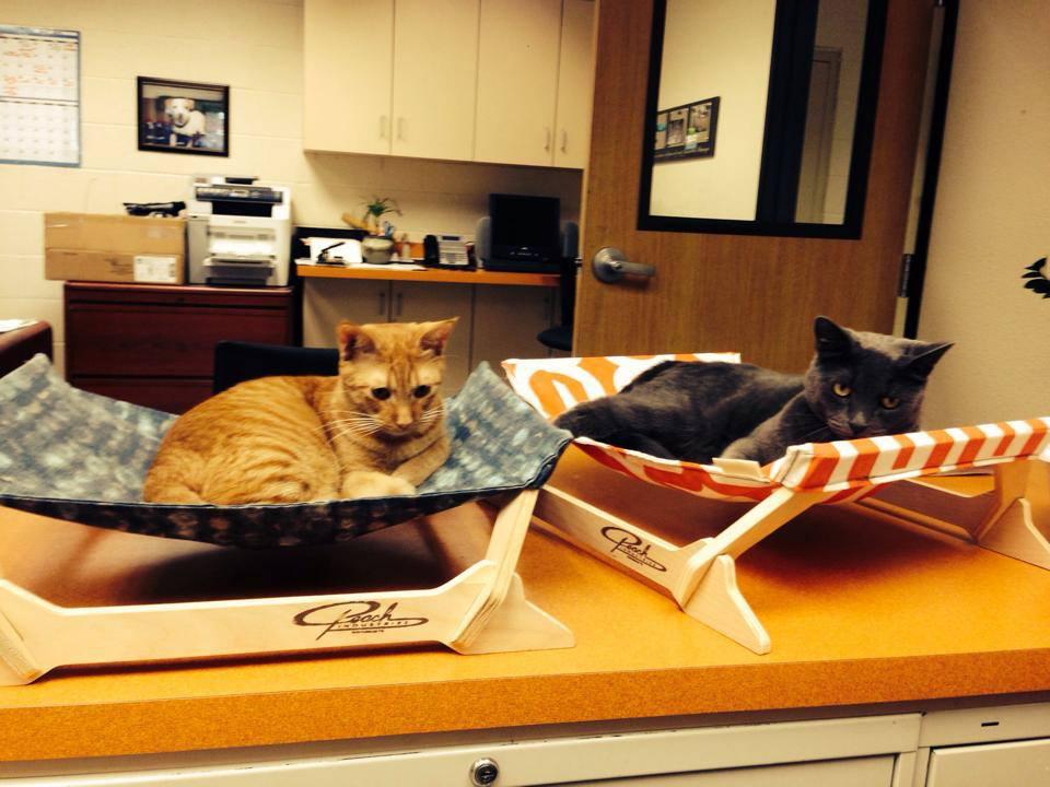 MSRPAC office kitties hard at work