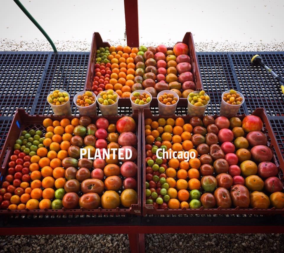 FARMER PIC 1.jpg