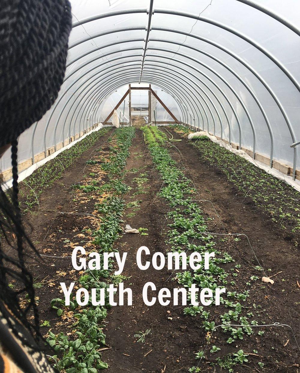 Gary's Greenhouse longshot.jpg