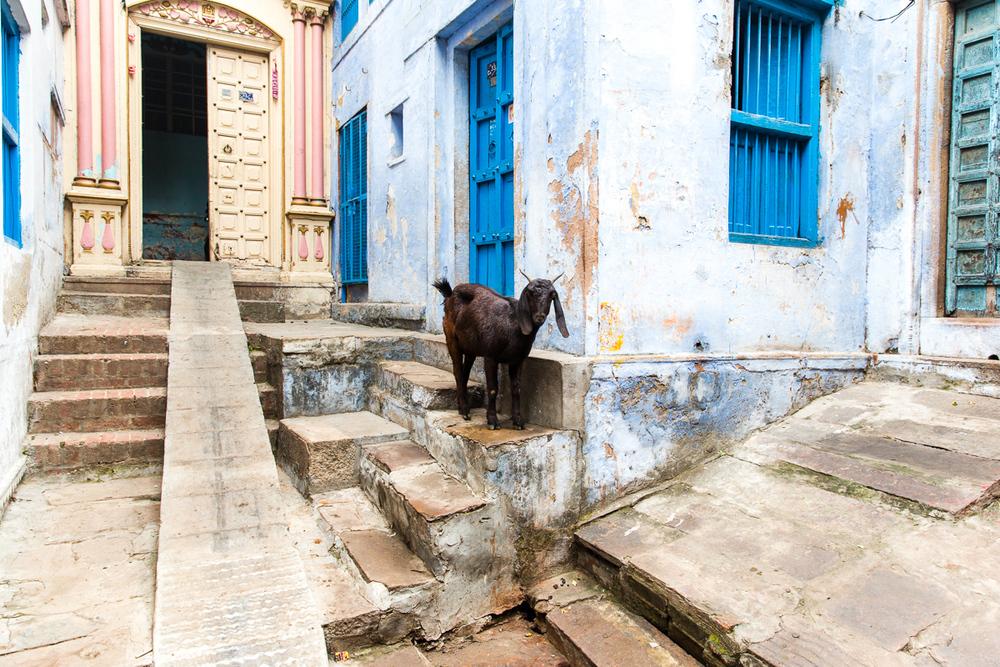 Varanasi-84.jpg