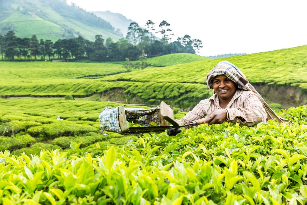 Kerala-1.jpg