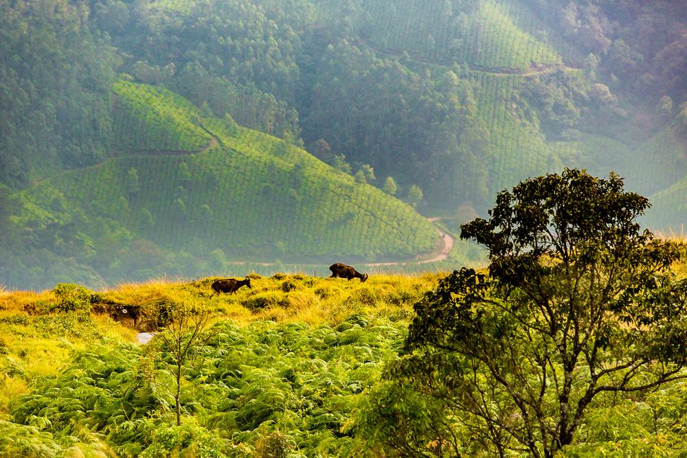 Kerala-7.jpg