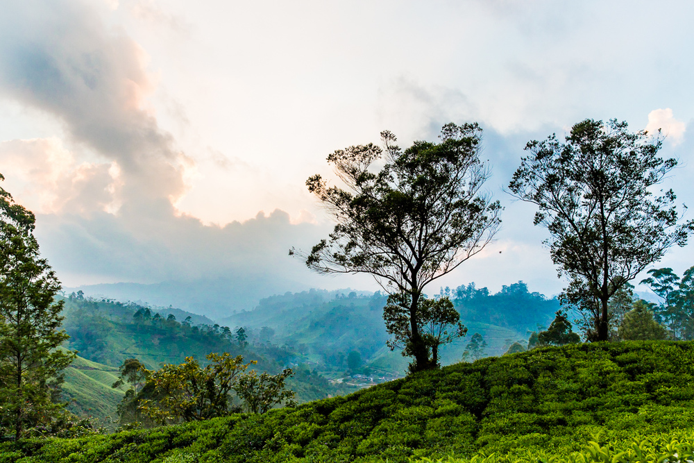 Kerala-13.jpg
