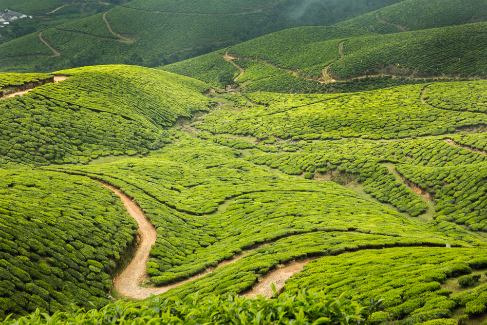 Kerala-21.jpg