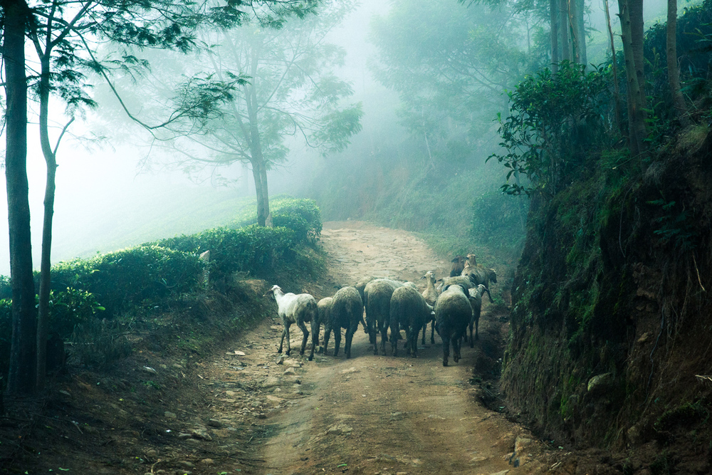 Kerala-26.jpg