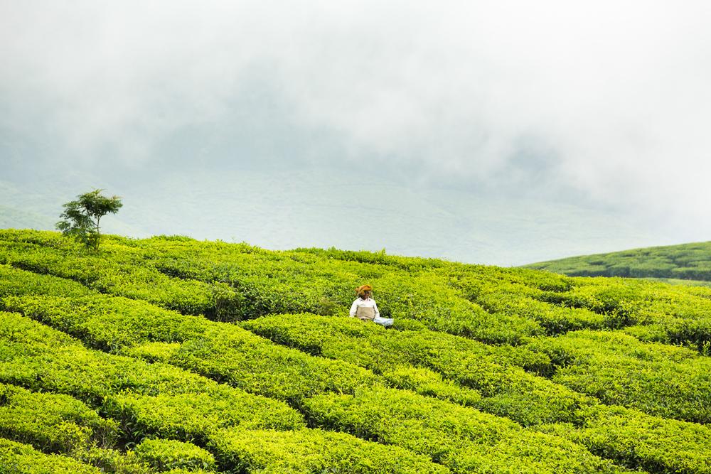 Kerala-31.jpg