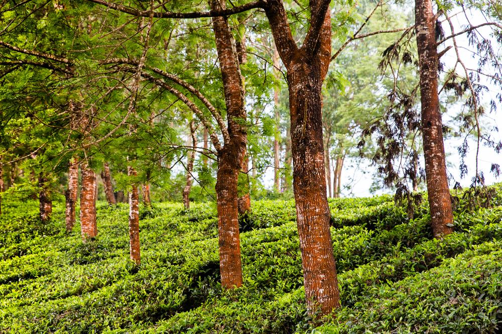Kerala-34.jpg