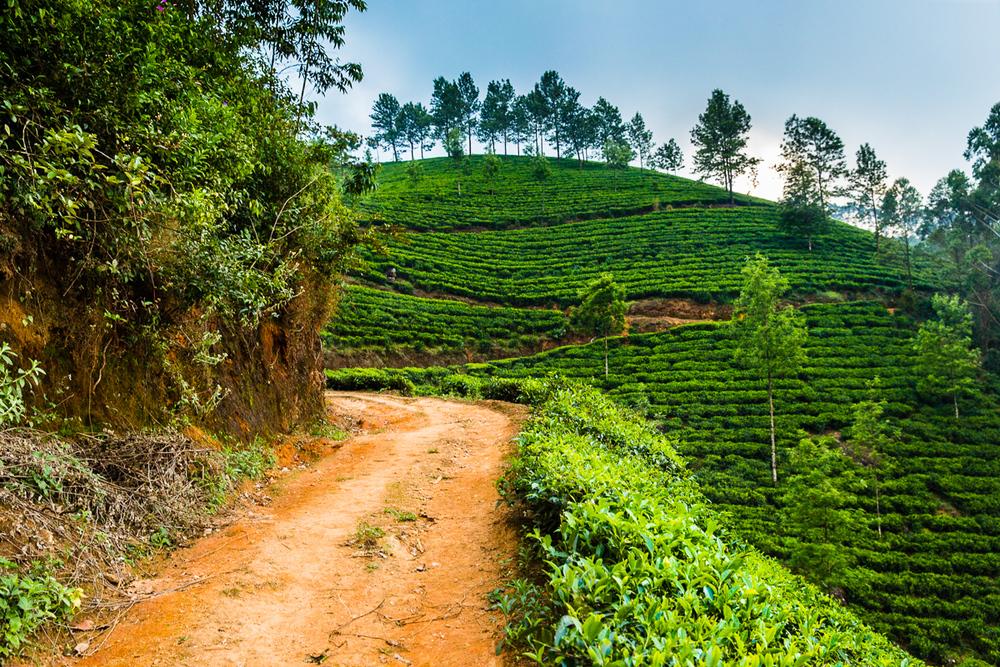 Kerala-54.jpg