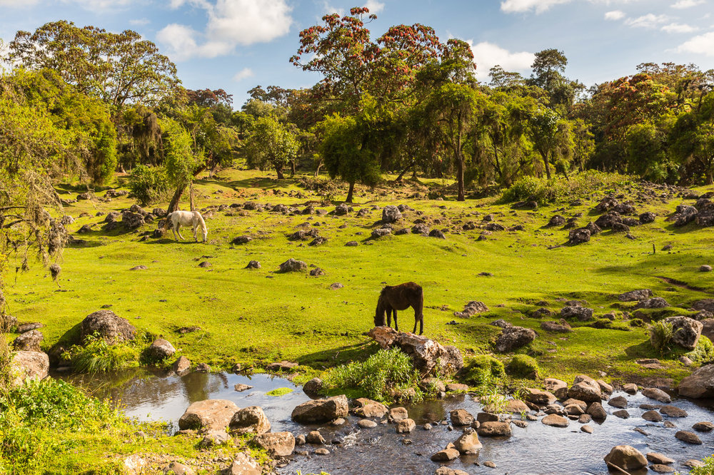 Ethiopia_Bale-14.jpg