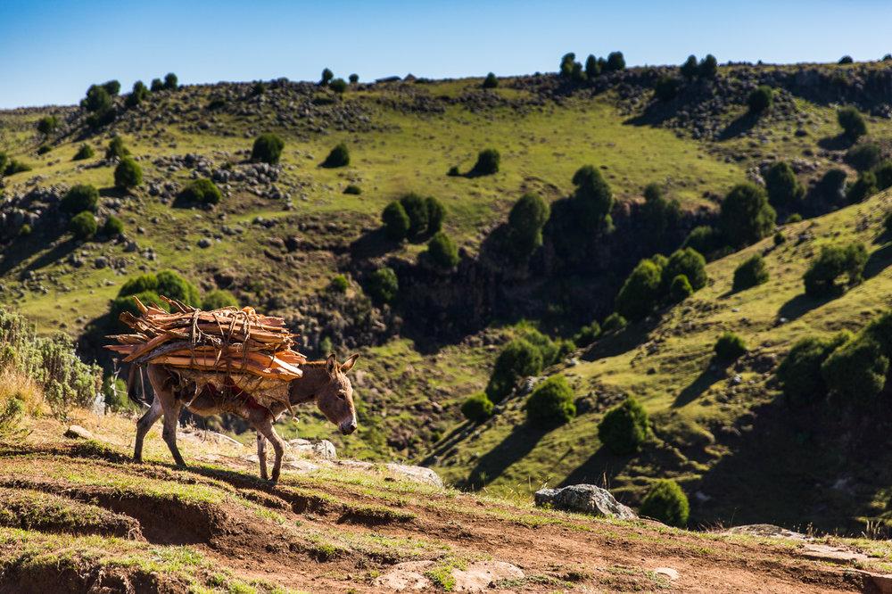 Ethiopia_Bale-36.jpg