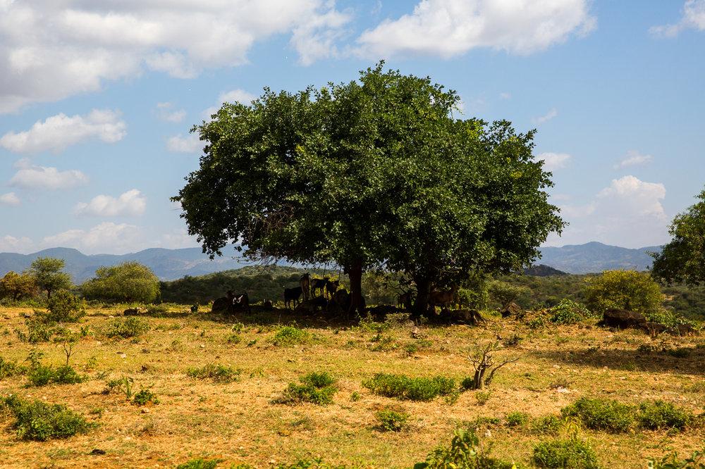 Ethiopia_Omo_Hamer-19.jpg
