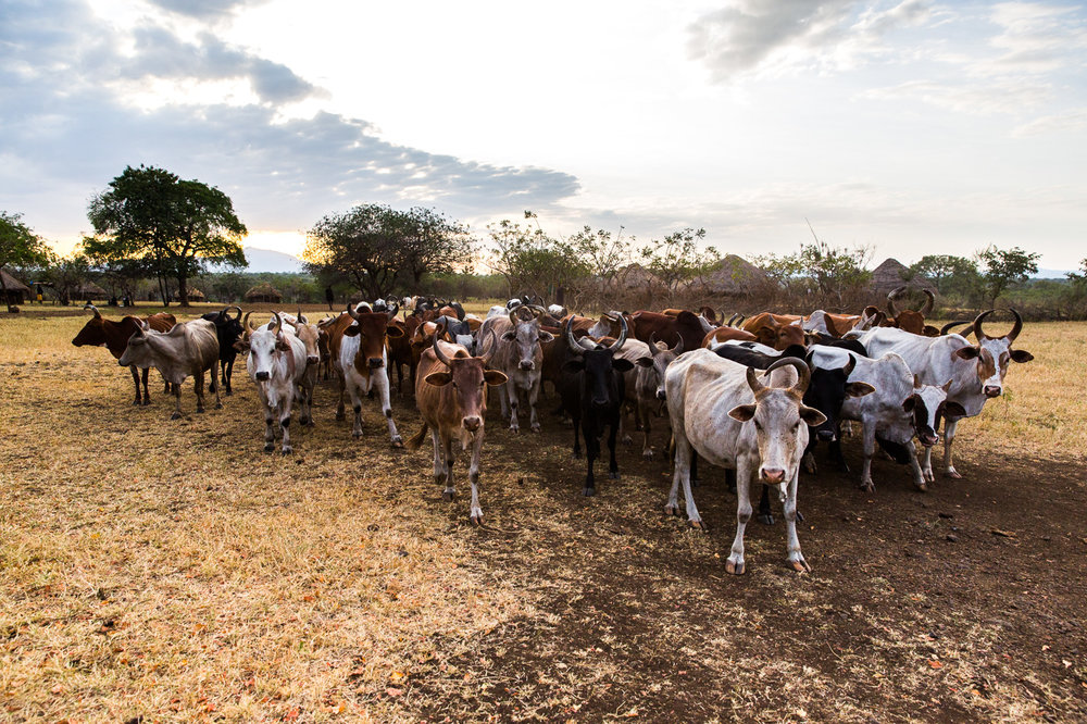 Ethiopia_Omo_Mursi-24.jpg