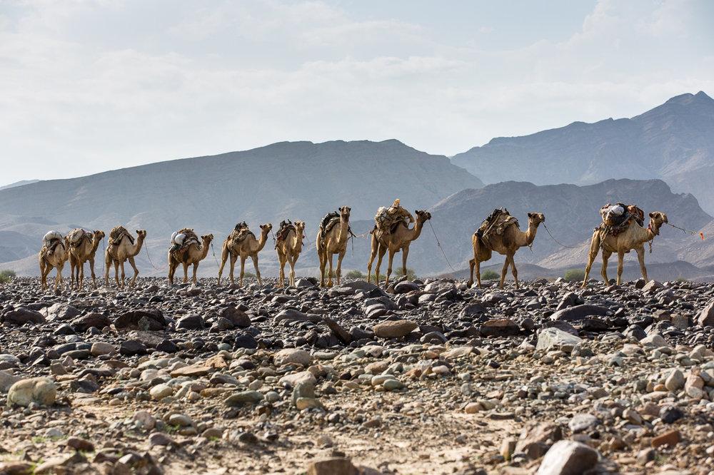 Ethiopia_Danakil-29.jpg