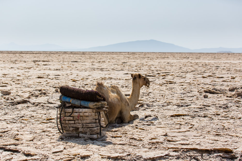 Ethiopia_Danakil-42.jpg