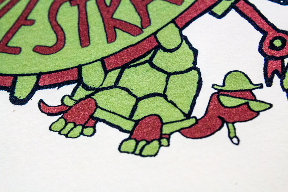 closeup_turtle.jpg