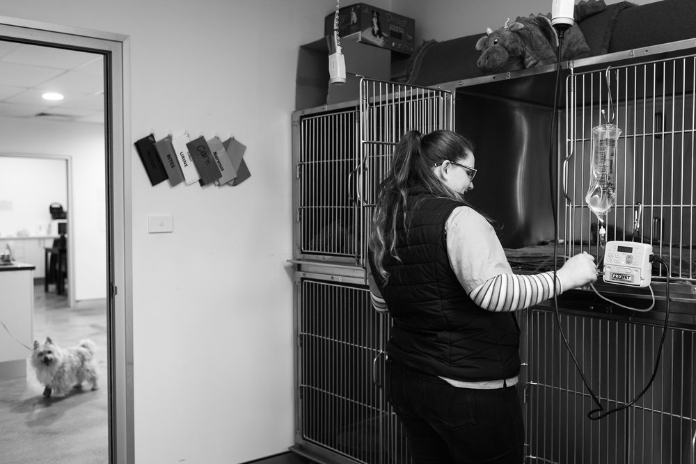 Nurse Kelsey Savage cleans the kennel of a dog who stayed overnight after surgery.  6 July, 2018.