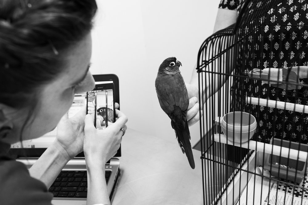 It's not unusual to see owner's like Marie Stove relate pet history and symptoms visually via devices. Her Conure, Peanut, needed a beak trim.  20 March, 2018.