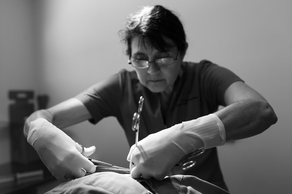 Dr Karen Viggers removes anal glands from a dog.  23 February, 2018.