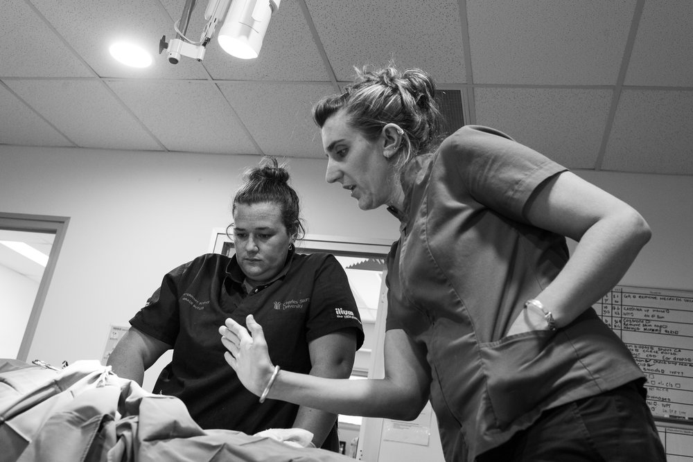 Dr Louise Grey ( right ) gives advice to Dr Grace Butler about suturing a fairly long incision. Butler is performing her first major surgery: debridement of necrotic tissue from a cat after a dog bite.  24 January, 2018.