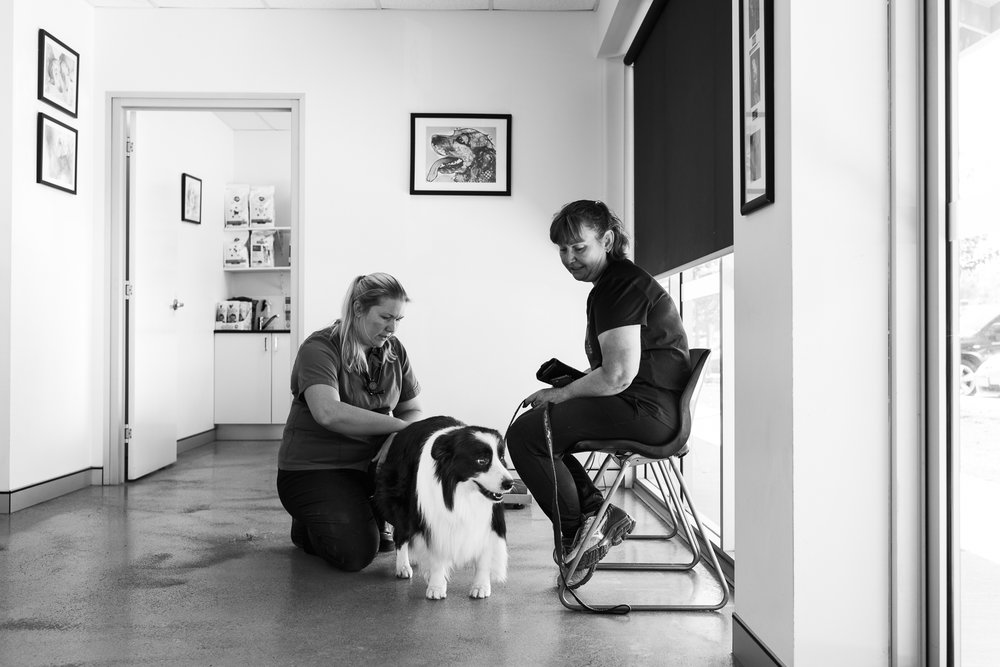 Dr Fiona Starr takes a quick look at Teresa Bailey's dog, Hunter, prior to consultation.  3 April, 2018.