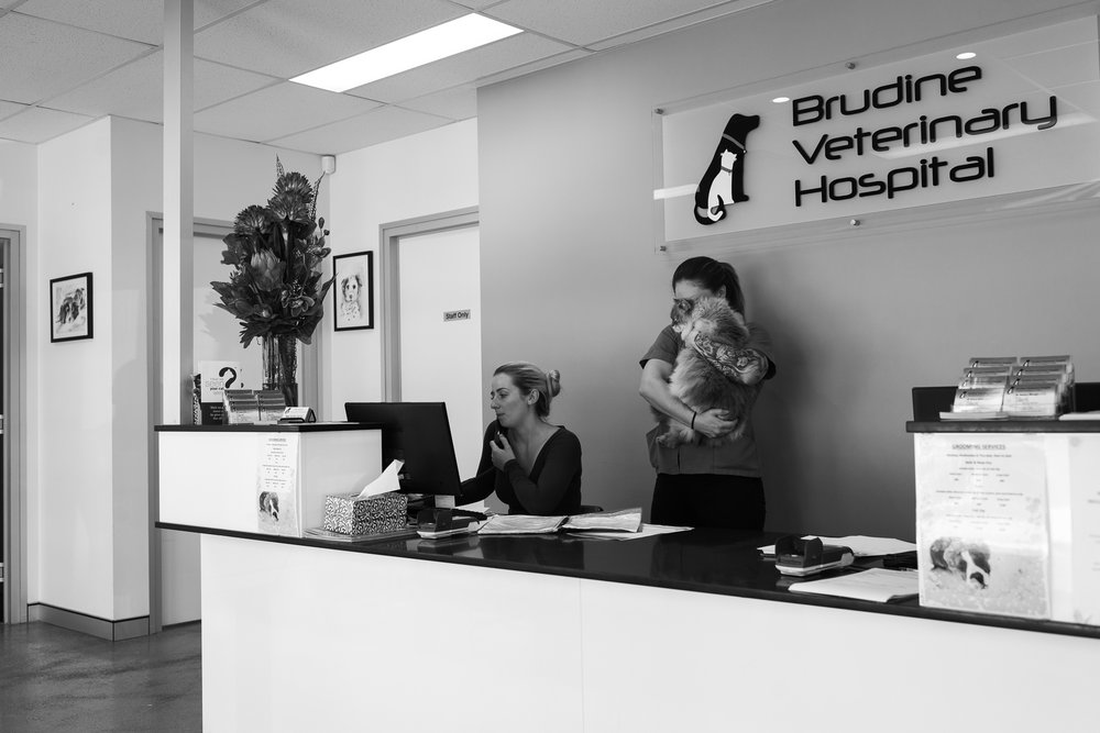 Receptionists Sorrel Nation ( left ) and Rebekah Morton, with practice cat, Karli.  28 January, 2018.