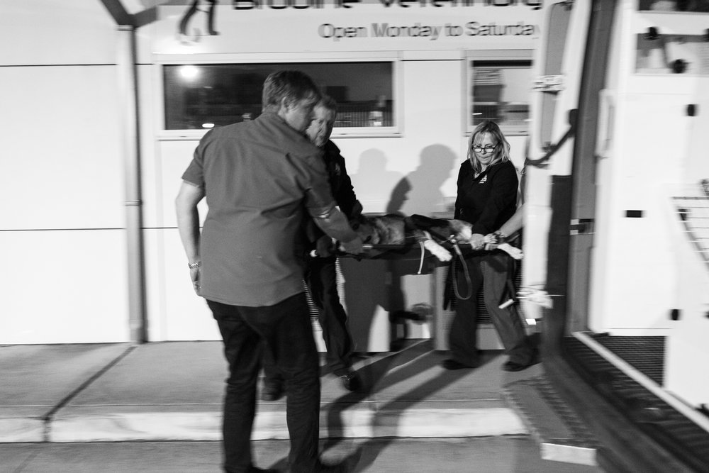 Dr Charlie Webb ( left ), helps Jarrod Male ( centre ) and Claudie Male load a dog in a critical condition into the pet ambulance (run by the ACT's  Pet Ambulance Services ) for safe transfer to an after-hours clinic. After-hours/emergency clinics and a pet ambulance service allows daytime veterinary practice staff to go home at the end of the day, to and rest and to avoid burn-out.  21 March, 2018.