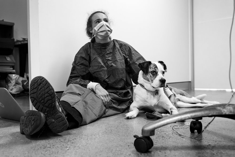 Nurse Chelsea Rose sits with Tiah who undergoes single-agent chemotherapy (Doxorubicin) to treat aggressive lymphoma. Tiah's owner, Tristyn eschewed an oncology specialist recommendation by her vet, Dr Fiona Starr; she preferred to use Brudine because she trusted the staff.  23 December, 2018.