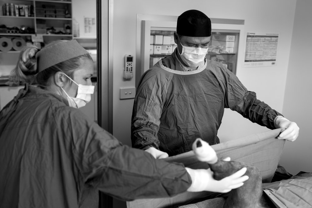 Dr Fiona Starr and Dr Charlie Webb organise the surgical drapes prior to surgery.  16 March, 2018.