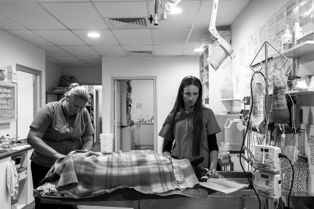 Dr Fiona Starr ( left ) and Nurse Chelsea Rose begin the process of Turbo's recovery.  16 March, 2018
