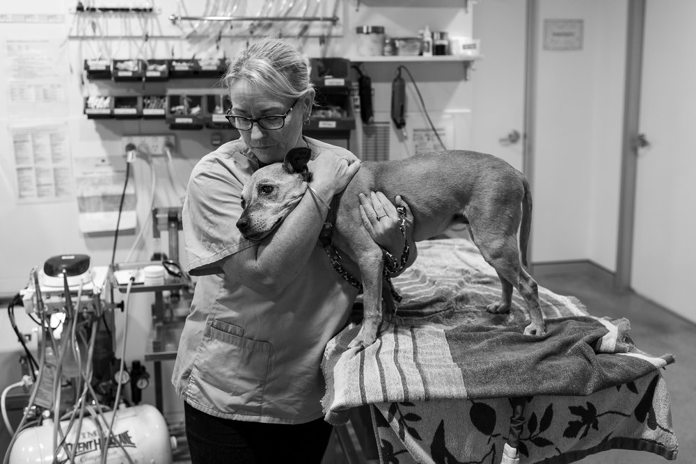 Nurse/Groomer Maree Watt comforts Phoebe, who is very ill and, sadly, about to be euthanised.  22 March, 2018.