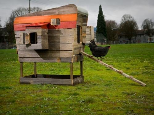 Crazy for Chicken Coops | California Home + Design          via  chdresource.com
