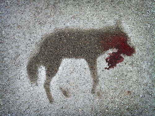 dead coyote outline in winter road salt     via  flickr.com